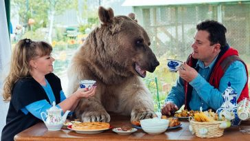 """Meet the Russian family and their big grizzly """"son"""""""